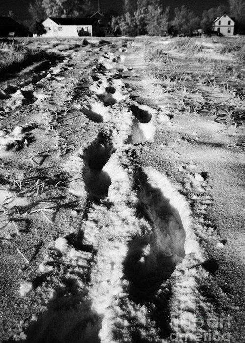 Fresh Greeting Card featuring the photograph fresh footprints crossing deep snow in field towards small rural village of Forget Saskatchewan Cana by Joe Fox