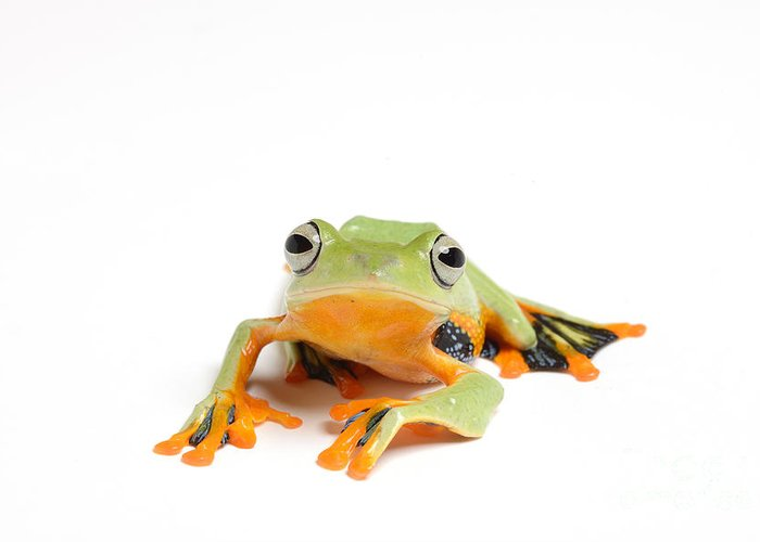 Frog Greeting Card featuring the photograph Gliding Frog by Scott Linstead
