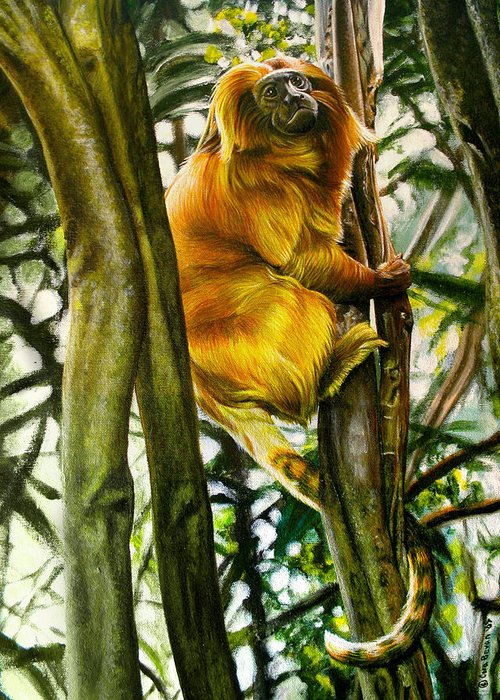 Tamarin Greeting Card featuring the painting Gold Mane by Cara Bevan