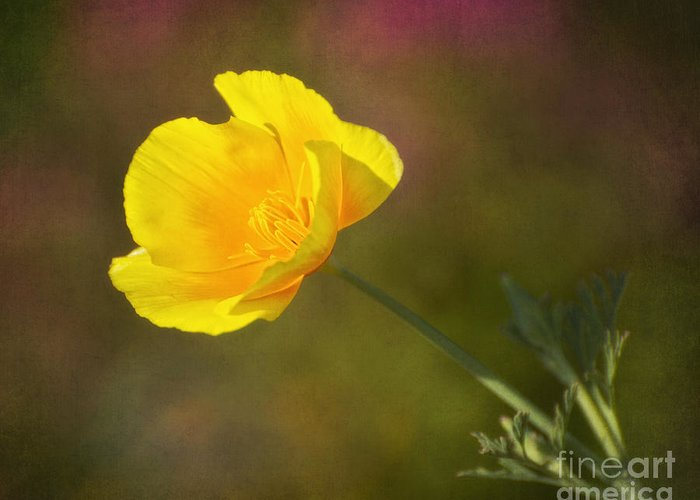 Flower Greeting Card featuring the photograph Golden by Claudia Kuhn