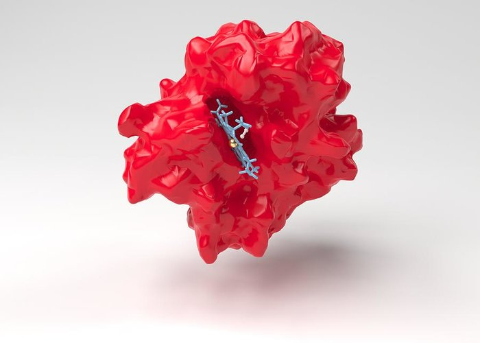 Artwork Greeting Card featuring the photograph Haemoglobin Molecule by Science Photo Library