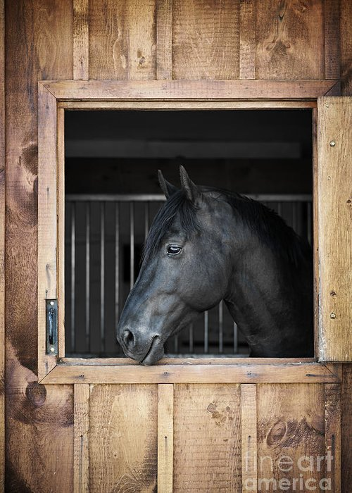 Horse Greeting Card featuring the photograph Horse In Stable by Elena Elisseeva
