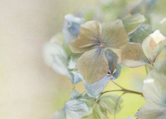 Hydrangea Greeting Card featuring the photograph Hydrangea by Jill Ferry