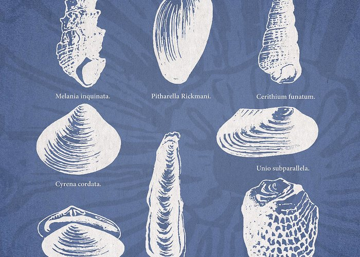 Mussel Greeting Cards
