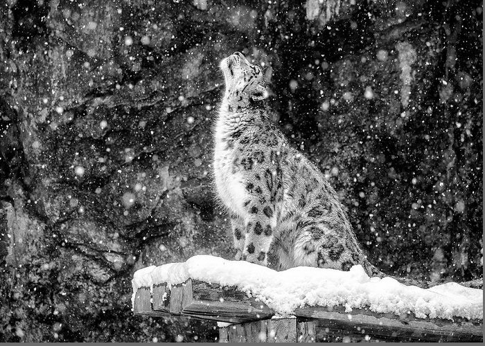 Snow Greeting Card featuring the photograph It's Snowing by David Williams