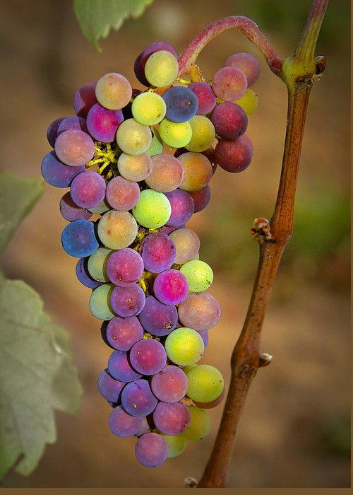Grapes Greeting Card featuring the photograph Jewel Tones by Jean Noren