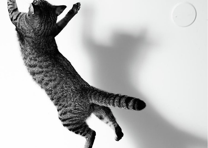 Pets Greeting Card featuring the photograph Jumping Cat by Akimasa Harada