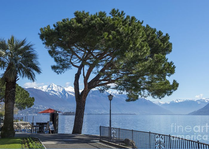 Street Greeting Card featuring the photograph Lakeside With Trees by Mats Silvan
