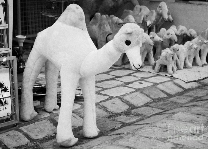 Tunisia Greeting Card featuring the photograph Large Soft Toy Stuffed Camel Souvenir At Market Stall In Nabeul Tunisia by Joe Fox