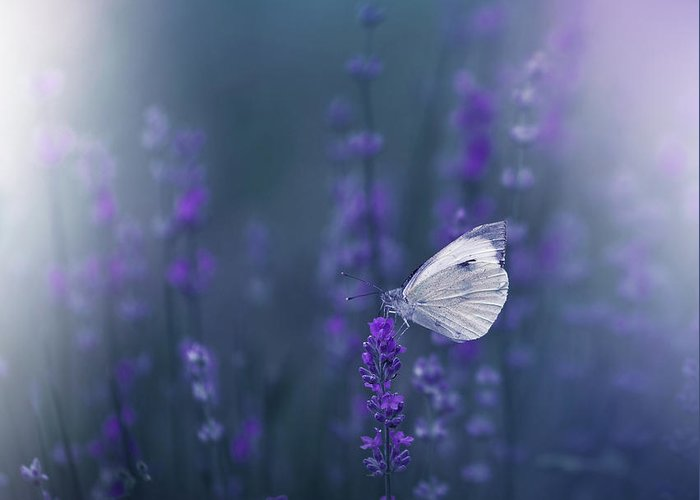 Designs Similar to Lavender Queen...