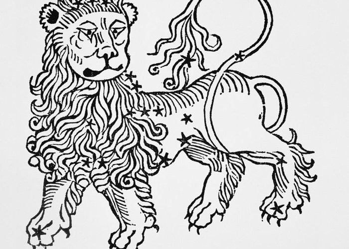 Leo Greeting Card featuring the drawing Leo by Italian School