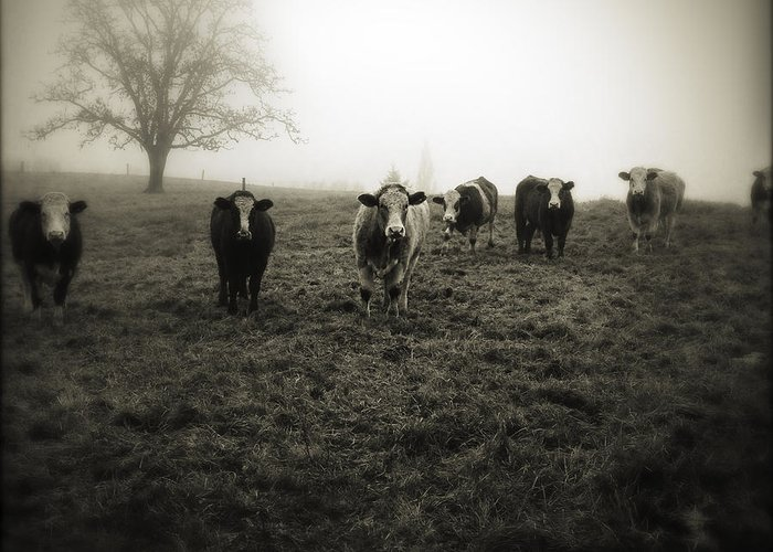 Fog Greeting Card featuring the photograph Livestock by Les Cunliffe