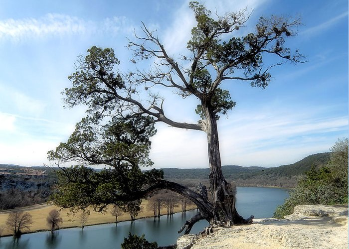 Tree Greeting Card featuring the photograph Lonesome by James Stough