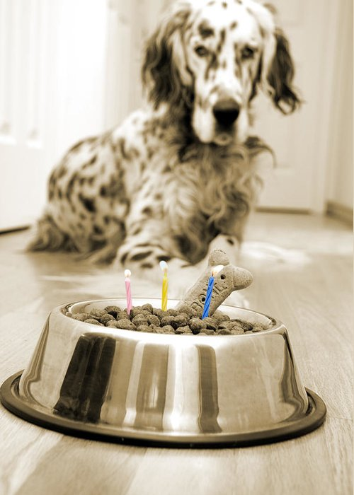 Dog Greeting Card featuring the photograph My Best Friend's Birthday by Alexey Stiop