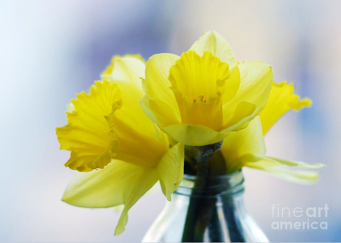 Close-up Greeting Card featuring the photograph Narcissus by Sarka Olehlova