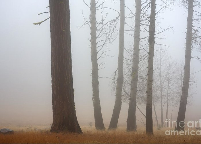 Fog Greeting Card featuring the photograph Out Of The Fog by Mike Dawson