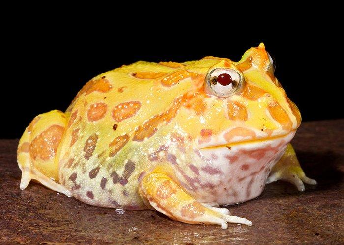 Pacman Frog Art | Fine Art America