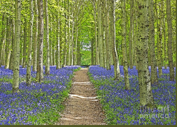 Spring Greeting Card featuring the photograph Path Through Bluebells Resembling Water Colour by Rosemary Calvert