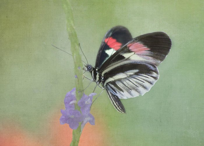 Butterfly Greeting Card featuring the photograph Piano Key Butterfly1 by Kim Hojnacki