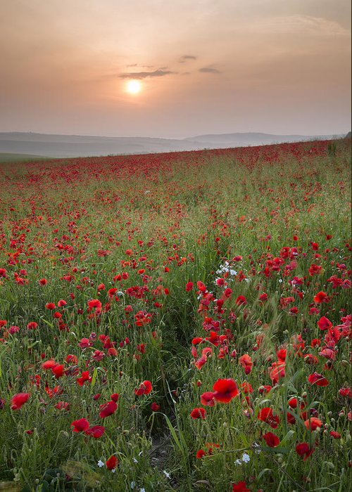Landscape Greeting Card featuring the photograph Poppy Field Landscape In Summer Countryside Sunrise by Matthew Gibson