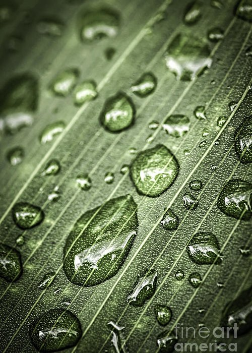 Plant Greeting Card featuring the photograph Raindrops On Green Leaf by Elena Elisseeva