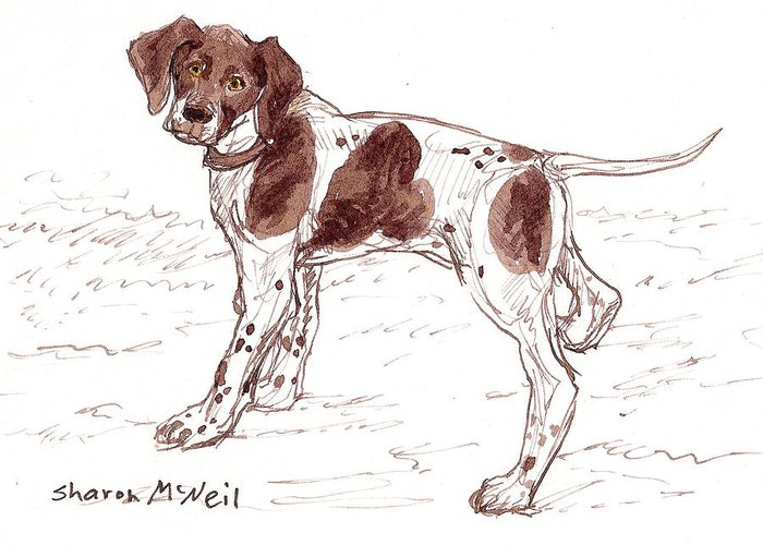 Dog Greeting Card featuring the drawing Ready To Play by Sharon McNeil