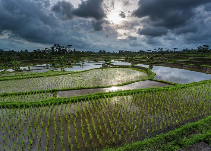 Tranquility Greeting Card featuring the photograph Rice Terraces In Central Bali Indonesia by Gavriel Jecan