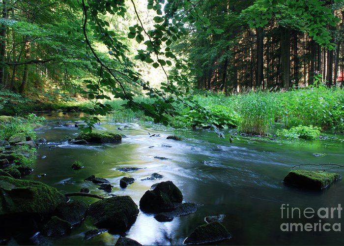Nature Greeting Card featuring the photograph River by Sarka Olehlova