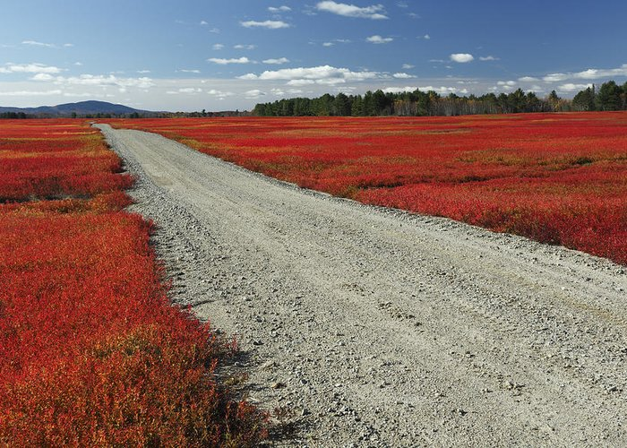 Feb0514 Greeting Card featuring the photograph Road Through Autumn Blueberry Maine by Scott Leslie