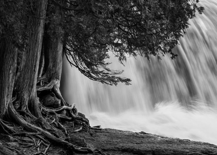 Rooted In Spring Cedar Trees Roots Spring Melt Gooseberry Falls Waterfall Greeting Cards