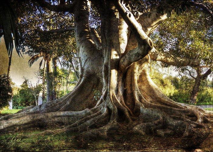 Tree Greeting Card featuring the photograph Roots by George Lenz