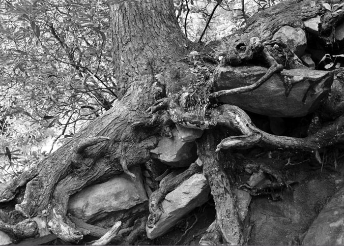 Fine Art Photography Greeting Card featuring the photograph Roots Of Life by David Lee Thompson