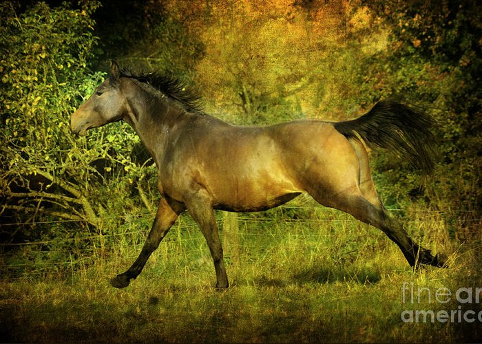 Horses Greeting Card featuring the photograph Running Free by Angel Ciesniarska