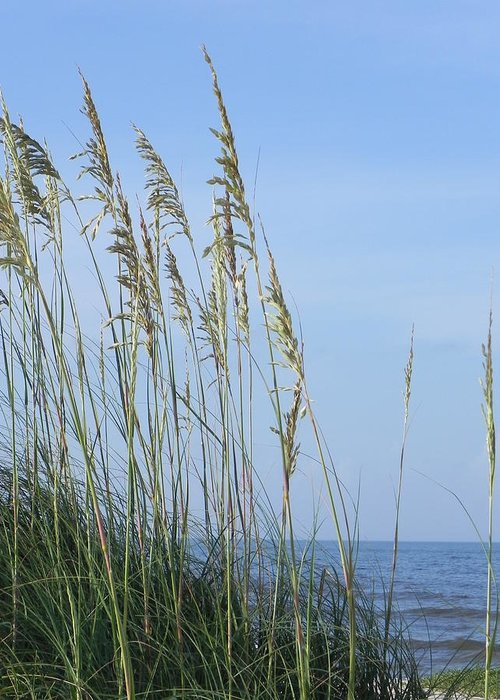 Sea Greeting Card featuring the photograph Sea Oats by Cynthia N Couch