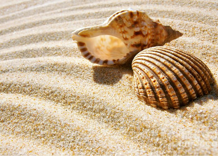 Abstract Greeting Card featuring the photograph Seashell And Conch by Carlos Caetano