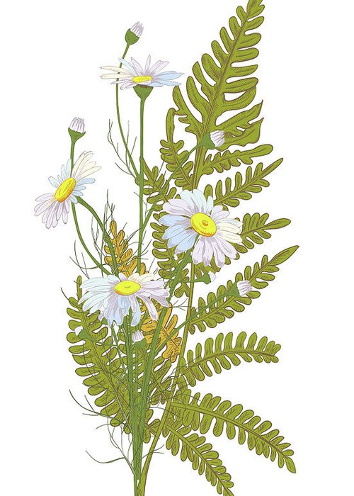 Flowerbed Greeting Card featuring the digital art Set Of Chamomile Daisy Bouquets White by Olga Ivanova