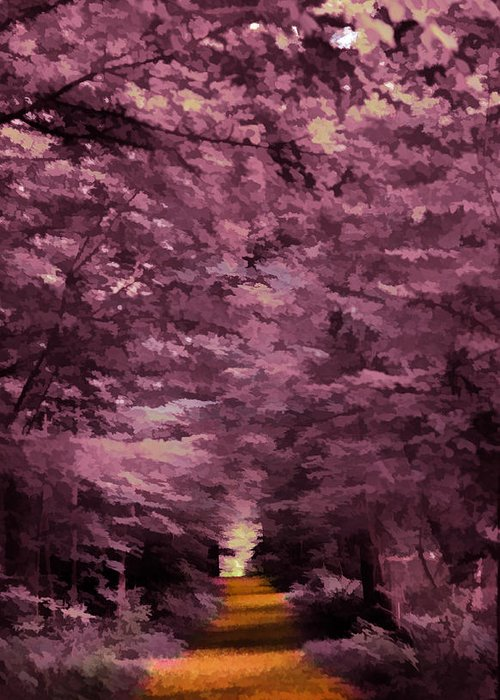 Trees Greeting Card featuring the photograph Shadow Path by Tina Baxter