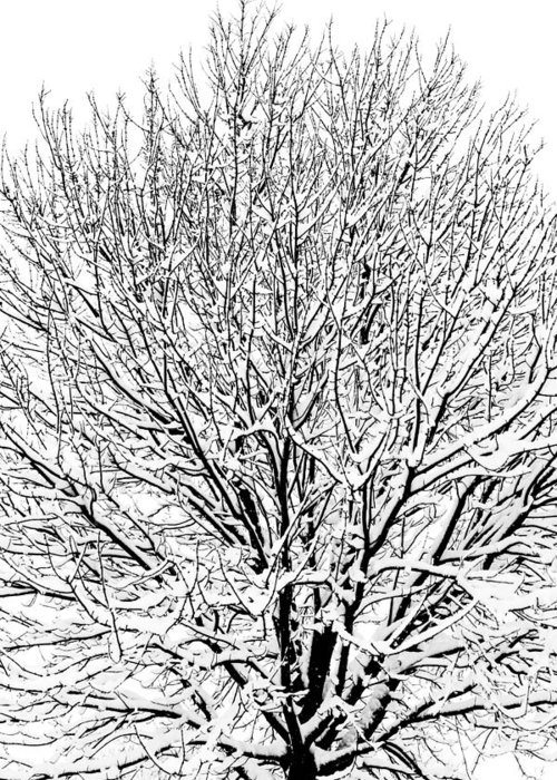 B&w Greeting Card featuring the photograph Snow Cover by Gaurav Singh