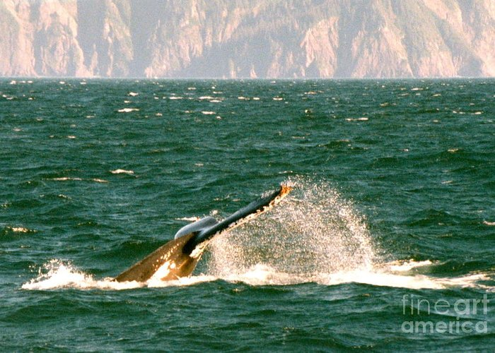 Humpback Whale Greeting Card featuring the photograph Splash by Johanne Peale
