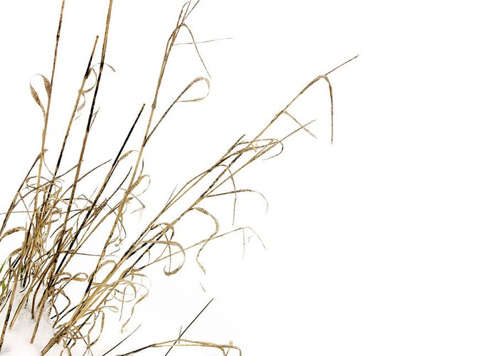 Outdoors Greeting Card featuring the photograph Stems In Snow by Bernard Jaubert
