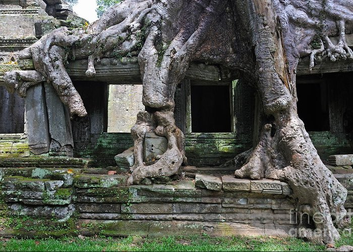 Angkor Greeting Card featuring the photograph Strangler Fig Tree Roots On Preah Khan Temple by Sami Sarkis