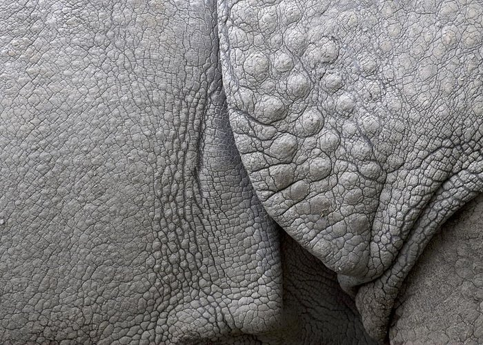 Rhino Greeting Card featuring the photograph Structure Of The Skin Of An Indian Rhinoceros In A Zoo In The Netherlands by Ronald Jansen