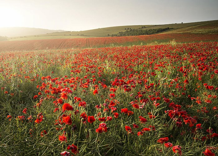 Landscape Greeting Card featuring the photograph Stunning Poppy Field Landscape Under Summer Sunset Sky by Matthew Gibson