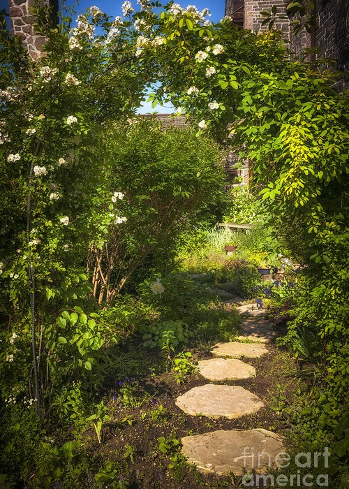 Garden Greeting Card featuring the photograph Summer Garden And Path by Elena Elisseeva