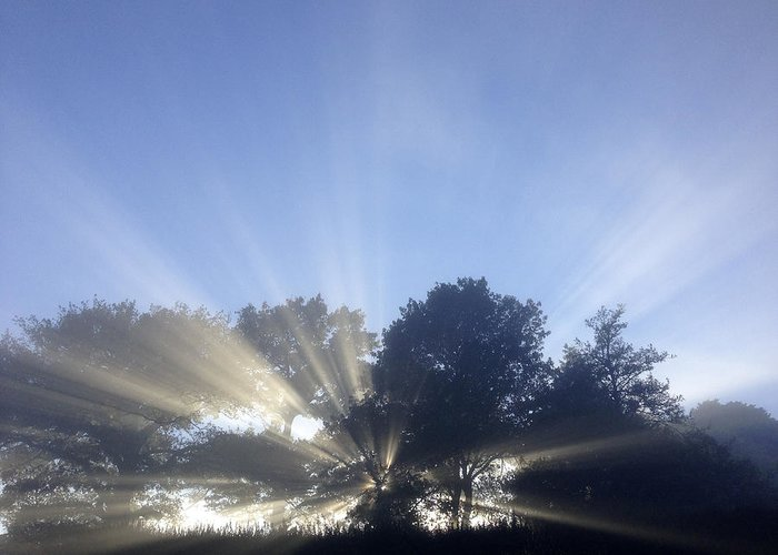 Forest Greeting Card featuring the photograph Sun Rays by Les Cunliffe