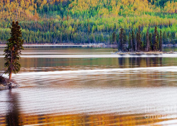 Beautiful Greeting Card featuring the photograph Sunset Reflections On Boreal Forest Lake In Yukon by Stephan Pietzko