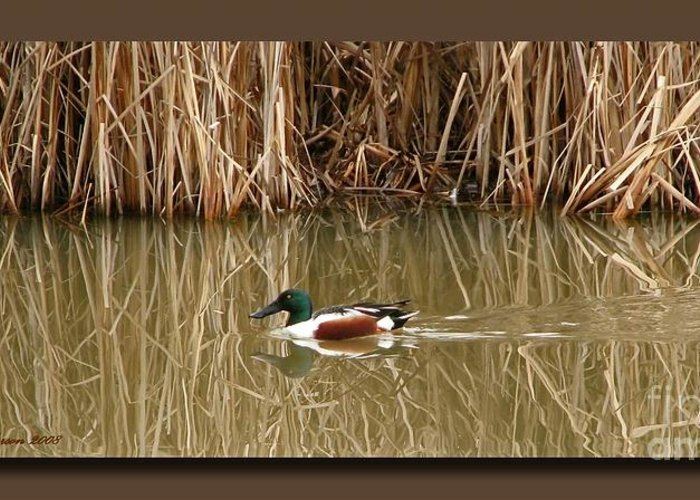 Faux Matting Greeting Card featuring the photograph Swimming Among The Reeds by Chris Anderson