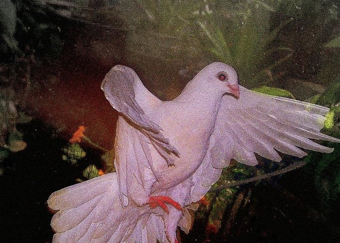Dove Greeting Card featuring the mixed media The Dance by YoMamaBird Rhonda