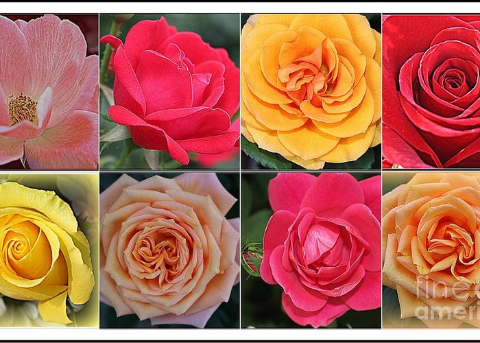 Rose Greeting Card featuring the photograph Spring Time Roses by Dora Sofia Caputo Photographic Design and Fine Art