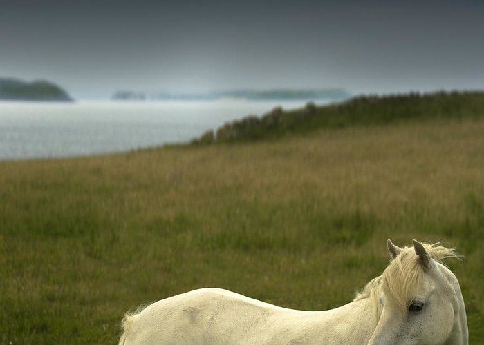 Welsh Pony Greeting Card featuring the photograph The Welsh Pony by Angel Ciesniarska